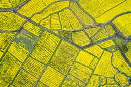 辽宁四成以上耕地年底前建成高标准农田