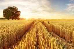 今年中央一号文件发布 聚焦乡村振兴和农业农村现代化