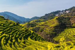 山東省委發布一號文件:全面推進鄉村振興加快農業農村現代化