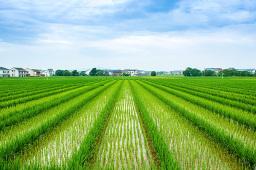 我国公布鼓励社会资本投资农业农村重点产业和领域