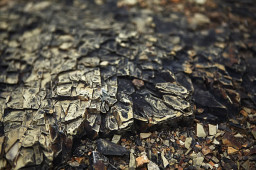 淡水河谷宣布 沃伊斯湾矿区扩建项目出产首批镍矿石