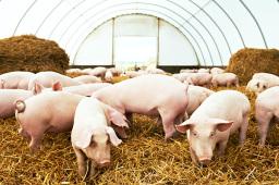 农业农村部畜牧兽医局印发《洪涝灾害灾后动物防疫技术指南》