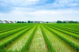 国务院:到2022年建成高标准农田10亿亩